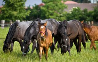 Aufzucht junger Pferde