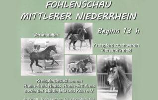Fohlenschau Mittlerer Niederrhein
